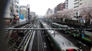 Sugamo station rain train cherry tree