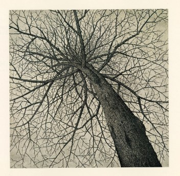"Etching of a bare tree, from ""A Fool's Life"""