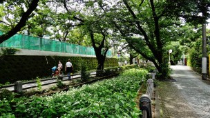 Sakurashinmachi old canal trees woman bike Tokyo
