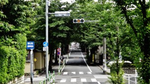 Sakurashinmachi tree-lined street women sidewalk
