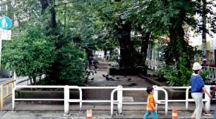 tree-lined canal park near Toritsudaigaku Station