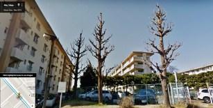 UR Akabanedai danchi building 37 trees