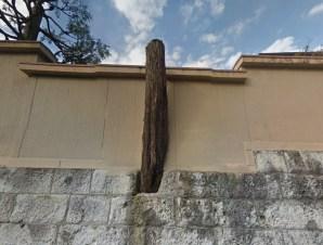 mejiro-cultural-village-tree-in-wall