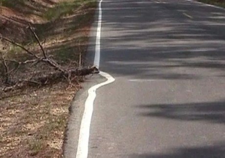 road-line-painted-around-fallen-tree-branch