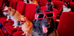 Man's Best Friend Movies