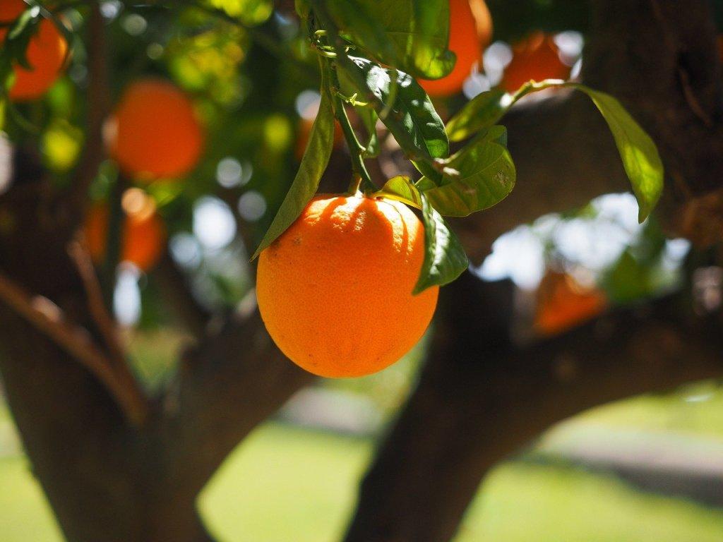 buffered vitamin C, buffered vitamin C powder, vitamin C buffered, what is buffered vitamin C