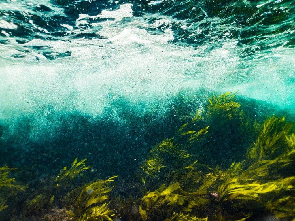 sea moss, sea moss benefits, sea moss gel, irish sea moss, benefits of sea moss, seamoss