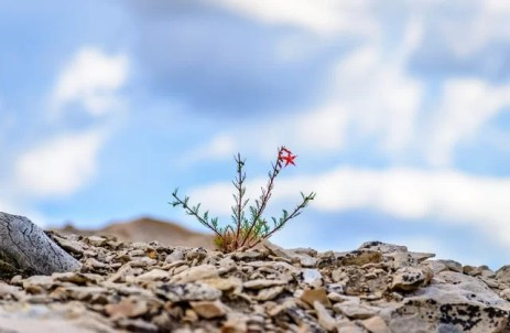 Sustaining the Future: 5 Tips to Grow a Business That's Just Starting