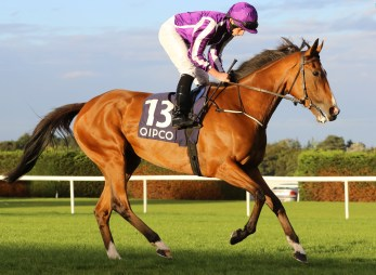 """Minding and Ryan Moore before """"The Quipco Irish Champion Stakes"""" GR1 at Leopardstown - Alain Barr - 10.09.2016"""