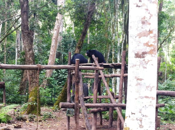 bears luang prabang
