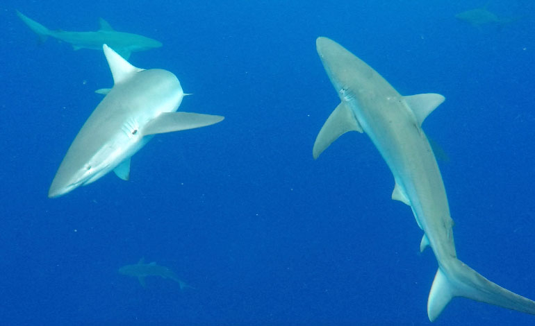 Cage Diving With Sharks Photo5