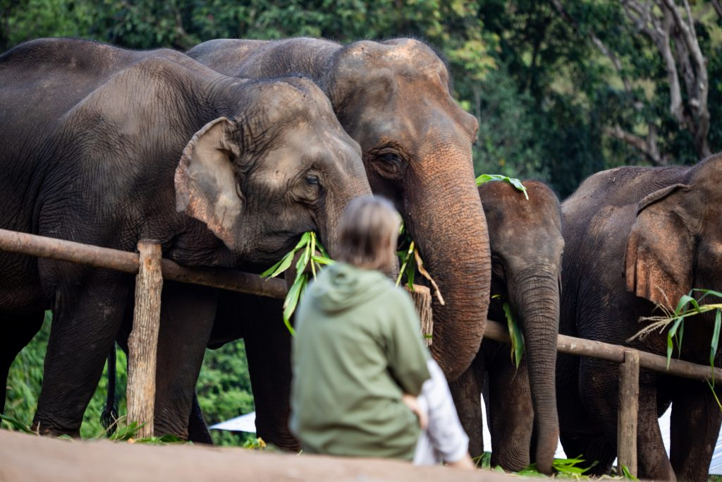 chiang-mai-elephant-sanctuary