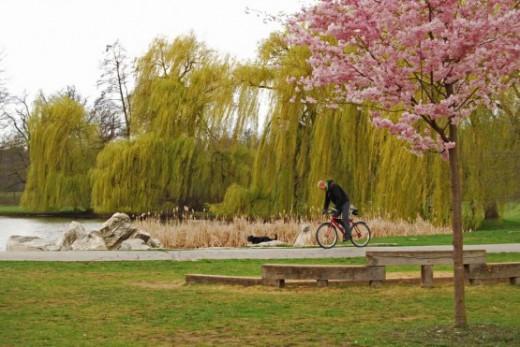 Public Parks that Allow BBQs!