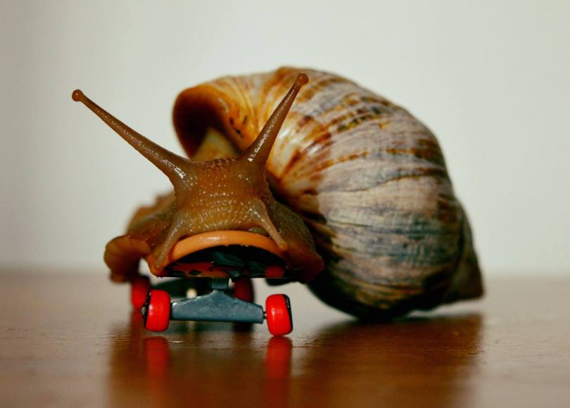 , Why Snails Make Great Pets – GALs, The Travel Bug Bite, The Travel Bug Bite