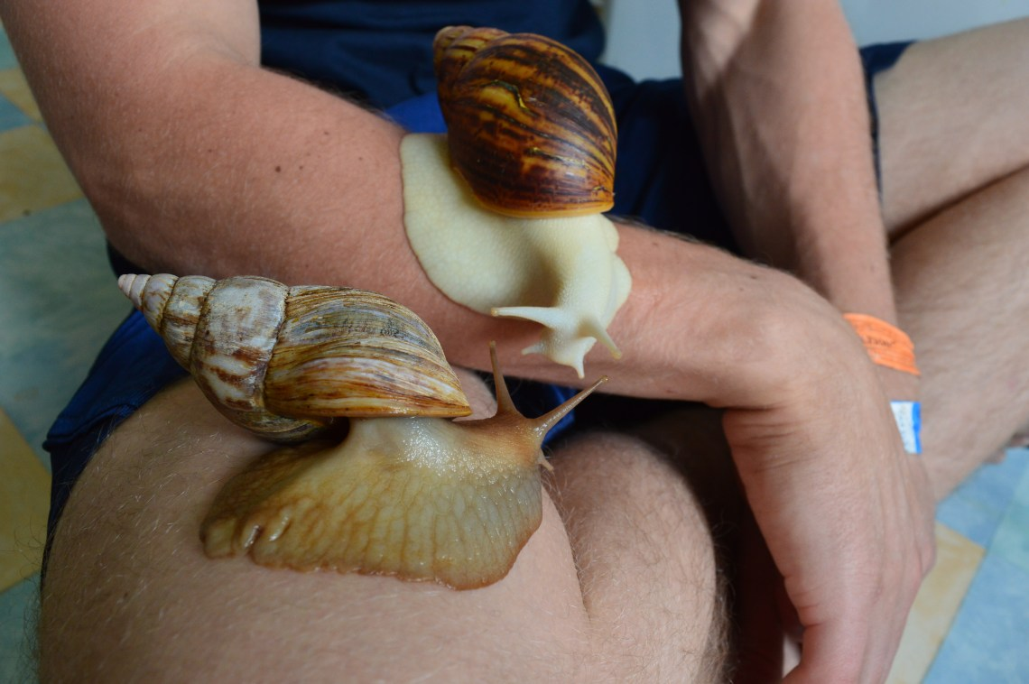 , Land Snails as Pets: Why GALs & Garden Snails Make Great Pets, The Travel Bug Bite