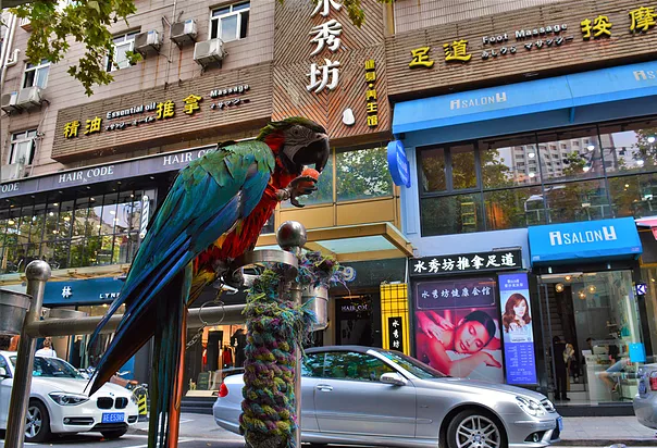 Shanghai's French Concession: Photo Diary