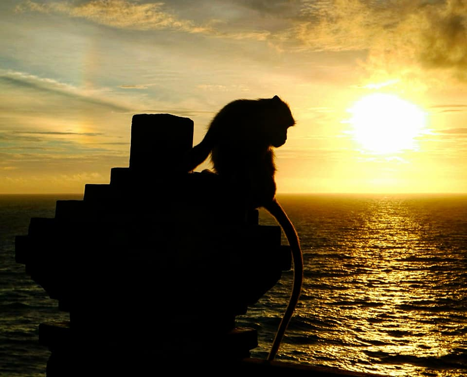 , Bali: Uluwatu Sunset & Evil Genius Monkeys, The Travel Bug Bite