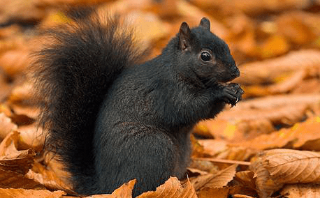 , The Black Squirrels of Kent State University, The Travel Bug Bite