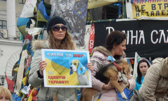 , Beagles for Peace – War in Ukraine, The Travel Bug Bite