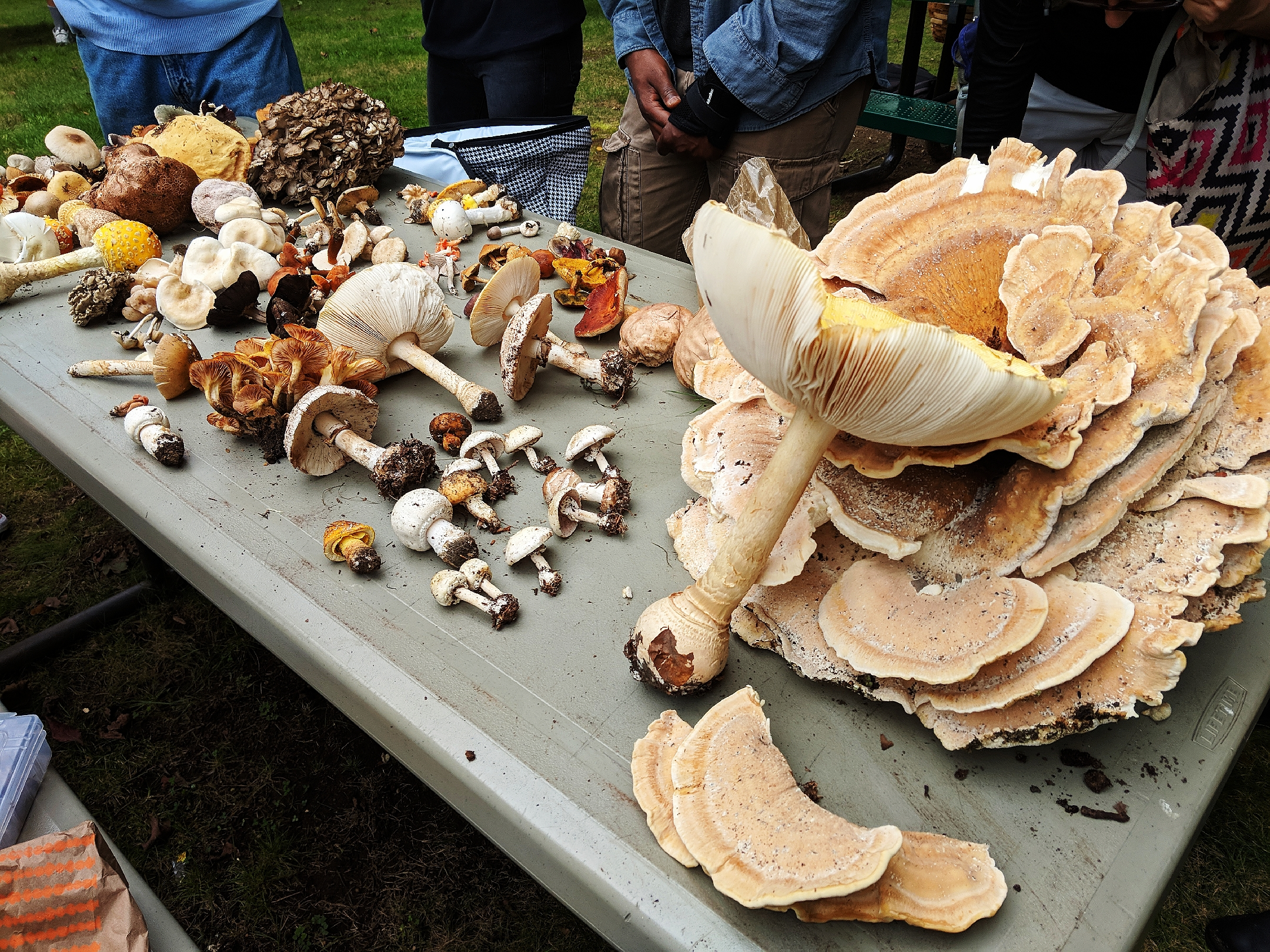 , The New York Mycological Society, The Travel Bug Bite