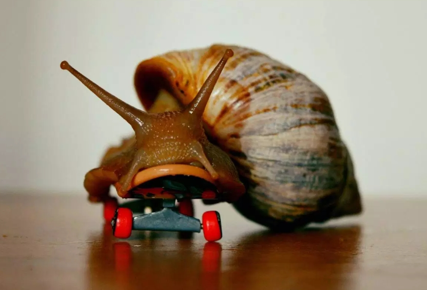 Snails, What do Snails, Cupid & V-Day have in common?, The Travel Bug Bite