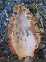 Morels, Morels: Easy to Identify Mushrooms, The Travel Bug Bite