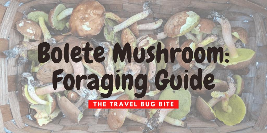 Bolete Mushrooms, Bolete Mushrooms: Foraging Guide, The Travel Bug Bite