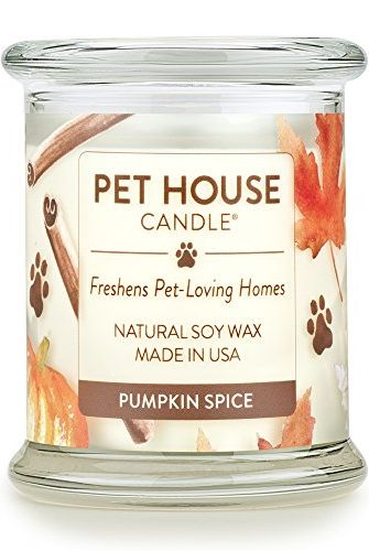 Pumpkin Scented, 10 Pumpkin Scented & Flavored Things, The Travel Bug Bite
