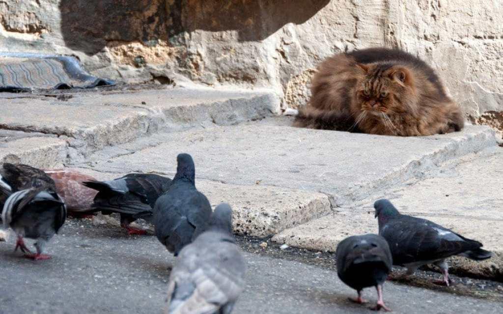Cat watching pigeons