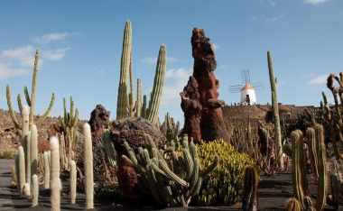 Cacti at Jardin de Cactus, Lanzarote