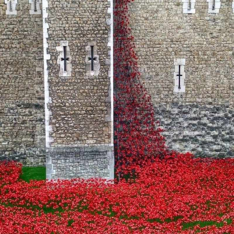 Poppy Installation Tower of London