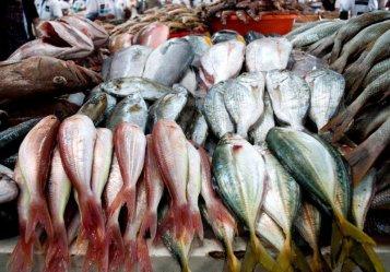 fish-deira-souk