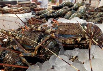 lobster-dubai-fish-market