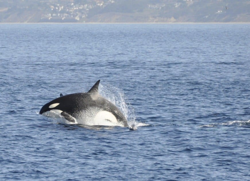 Whale Watching in Monterey Bay – an epic boat trip