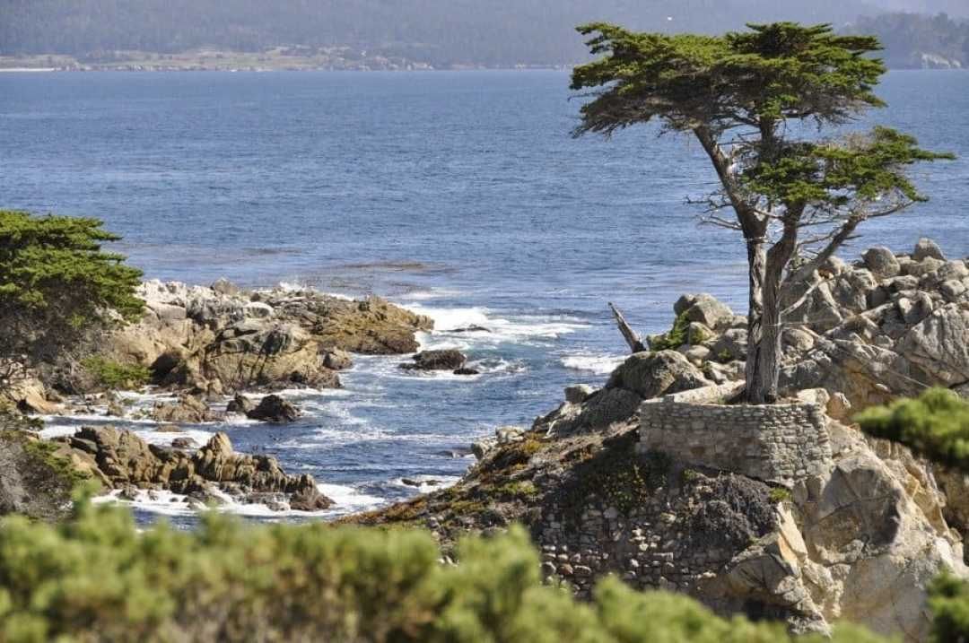 Lone Cypress Tree, 17-Mile Drive
