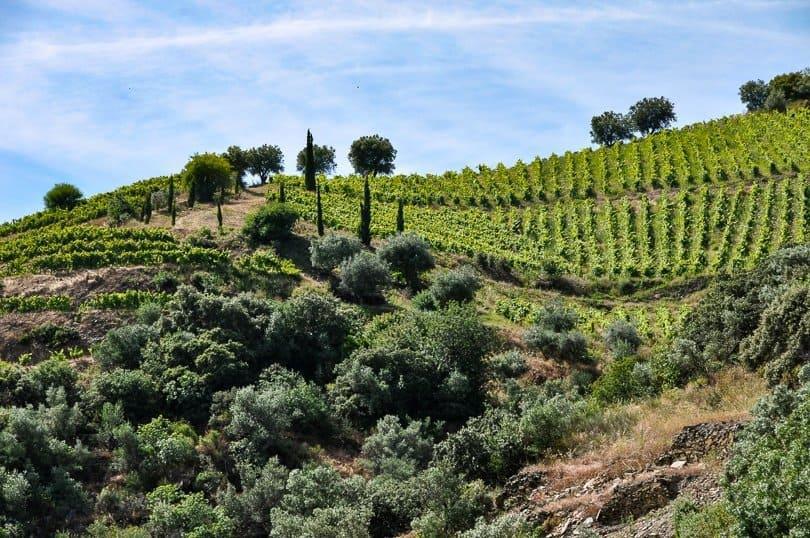 douro-valley-vine-terrace