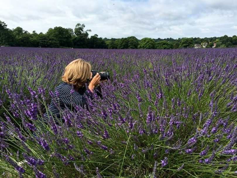 photographing-lavender