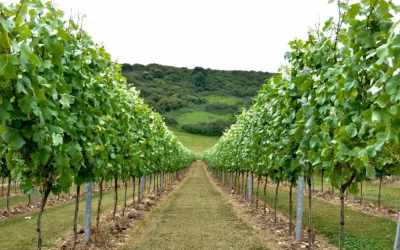 Rathfinny Wine Estate – Home of Sussex Sparkling
