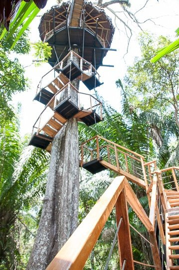 treehouse-staircase-jungle