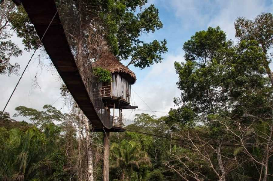 Amazon Jungle Treehouse Peru