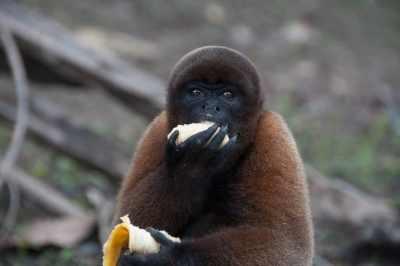 Adventure and Wildlife in the Amazon Jungle