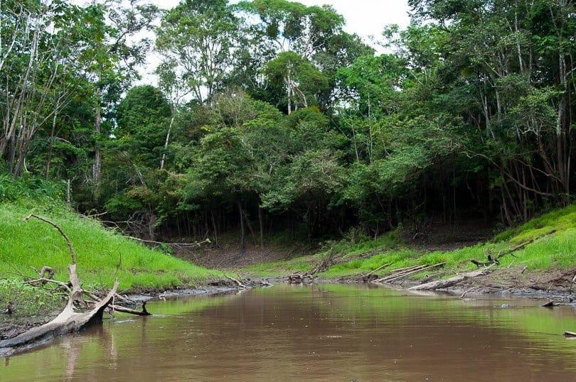 amazon-tributary-jungle