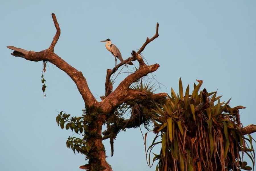 stork-amazon-jungle