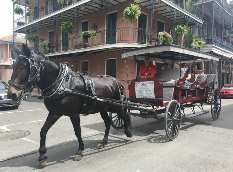 Mule and Carriage New Orleans