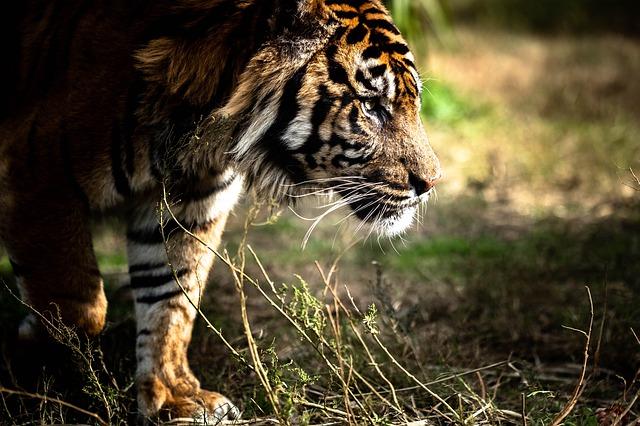 animals-in-indonesia-rainforest