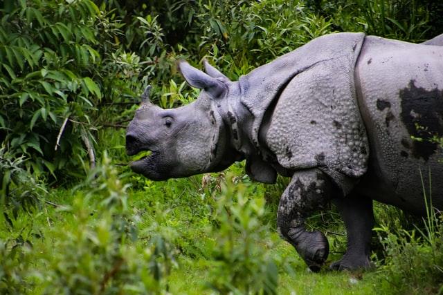 extinct-animals-in-indonesia
