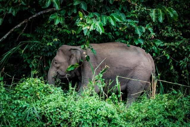 unique-animals-of-indonesia
