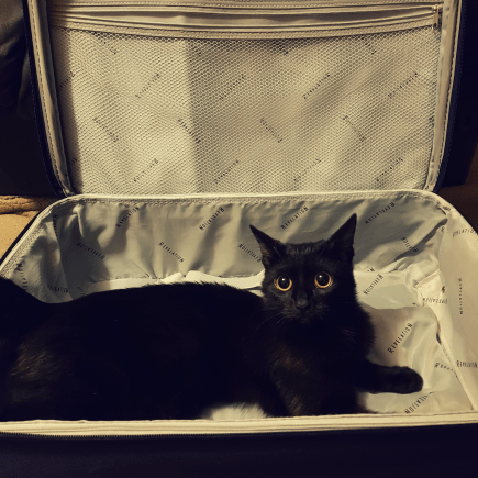 a black cat inside a purple carry-on suitcase with grey interior