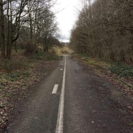 An overgrown road leading nowhere