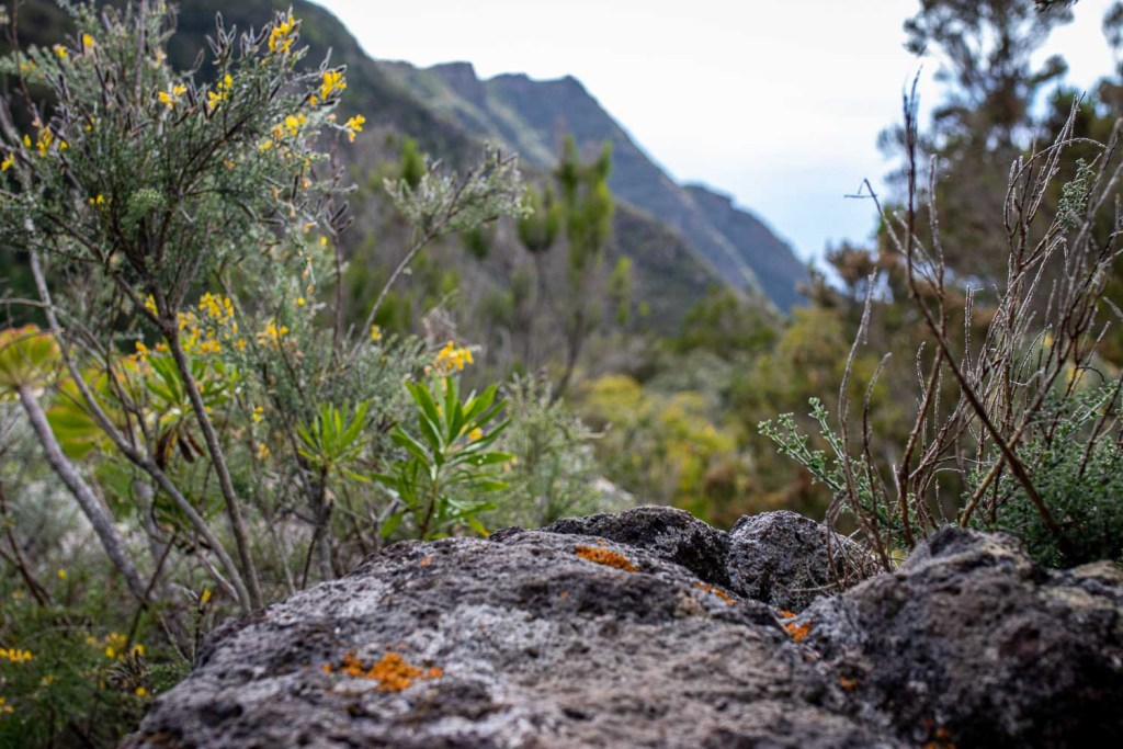 Teneriffa Anaga Nationalpark wandern-5